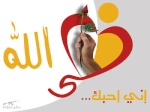 علاء المصرى22