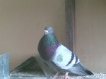 javier-colombaire