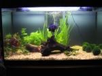Oscarfish