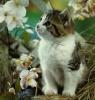 Kitty ;D