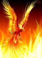 Phoenix24