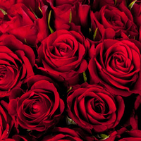 Roses88
