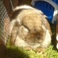 Ingleby Bunny Boarding