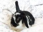Dominic the bunny