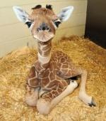 Girafon