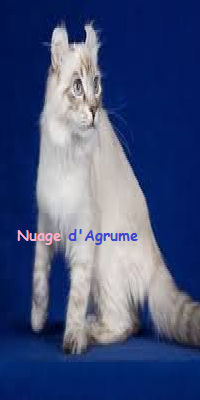 Nuage d'Agrume