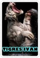 tigres ivan