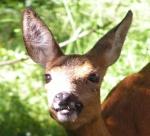 Jagdforum Jagd und Wald. Das freundliche Forum unter den Jagdforen 80-4