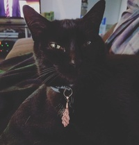 La Sorcière aux Chats