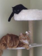 Caroline et ses chats