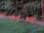Observation de la nature et de la faune sauvage 20728-74