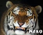 Nakomi