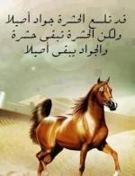 Hosam33