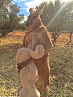 Kangaroota
