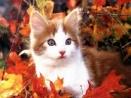 Patte d'automne