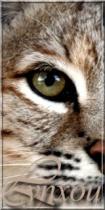 Cœur de Lynx