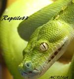 reptile83