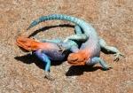 reptiliasoad