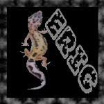 gecko62
