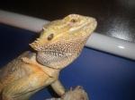 gecko30