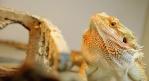 Reptiles Care