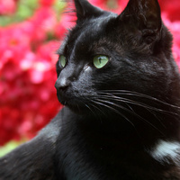 Ms Cat