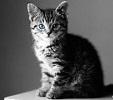 ze_cat