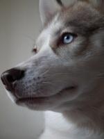 sid_wolf