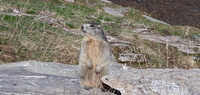 catcat14