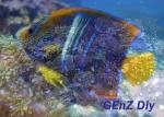Ikan Hias laut Import 127-68
