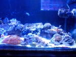 Ikan Hias laut 783-61