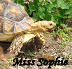 Miss Sophie