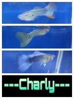 ---Charly---