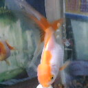 escalagoldfish