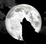 WolfHub