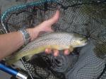fishingroro31