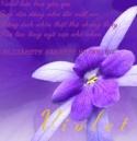 violet170289