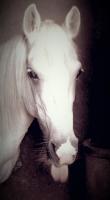 passion-cheval-juju