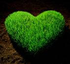 zelena dolina