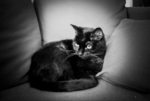 Ninozi