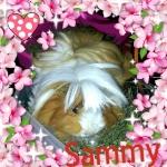 Sandra&Sammy