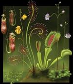 Vente de plantes ou de graines 1489-99