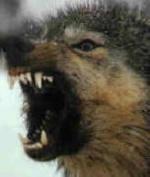 El lobo 7