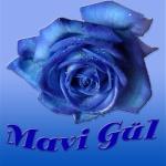 MaVi_GüL