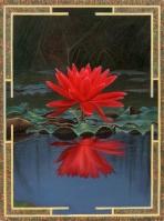 Cennet Çiçeği