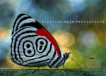 الرقيــــــــــــــــــة الشــــــــــــــــــــرعية الدعـــــــــــــوات المستجـــــــــــــــــــــابة 76-46