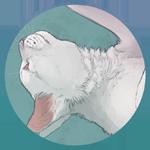 Kreftropod