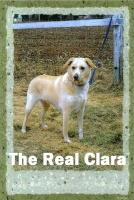 ClaraZ25