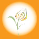 Tulipe 127