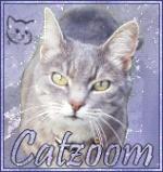 Catzoom